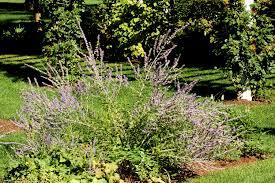 Best Plants For Rock Gardens by Rock Garden Plant Selection Guide Sun Plants Zone 5
