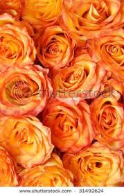 Pretty Orange What Is The Meaning And History Of Orange Roses Orange Roses