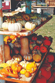 pumpkins for sale photo essay happy fall y all texan news service tarleton