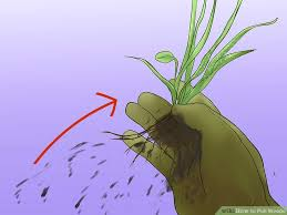 How To Cut Weeds In Backyard How To Pull Weeds With Pictures Wikihow