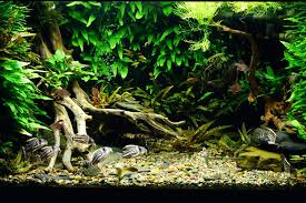aquascaping layouts with stone and driftwood aquascaping layouts layout 2 aquarium plants aquarium appartment