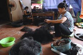 hair trade the hair trade is a billion dollar global industry daily news