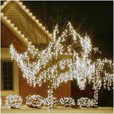 grapevine trees 5mm christmas lights elegantly erikbel tranart
