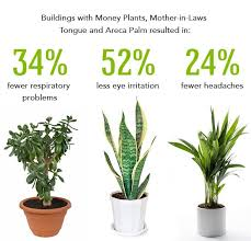 best plants for air quality get fresh air at home with easy indoor plants doomsday