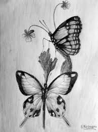 butterfly pencil sketch images for u003e simple pencil sketches of