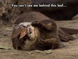 Otter Memes - land of the otters memes c8 gaming