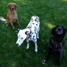 your best friend u0027s friend 29 photos dog walkers 5564 e