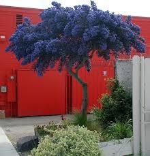 albero giardino 16 alberi ideali per piccoli giardini