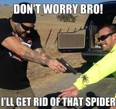 Funny Spiders Memes Of 2017 - dont worry bro