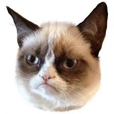 Angry Cat Meme Generator - grumpy cat clipart many interesting cliparts