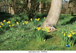 Easter Egg Hunt Garden Decorations easter egg hunt stock photos u0026 easter egg hunt stock images alamy