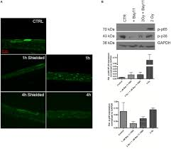 frontiers pro inflammatory signaling in a 3d organotypic skin