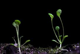 nasa plans to grow first plants on the moon d brief
