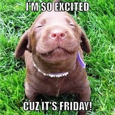 Happy Friday Memes - its friday meme happy friday funny images