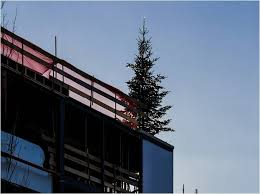 the tradition of christmas trees on construction sites acuity