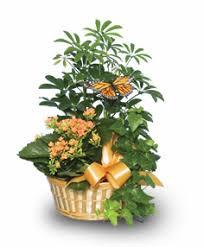 Indoor Plant Arrangements House Plants Pictures House Plant Gifts Flower Shop Network