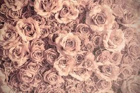 imagenes de rosas vintage fondo rosas vintage fotos de stock kitzcorner 67126465