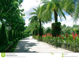 beautiful road with trees stock photography image 32387072