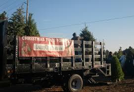 the third option for christmas trees go live codec prime 1