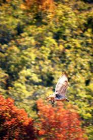 162 best birds of utah images on pinterest utah animals and