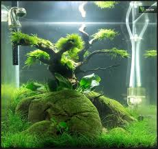Planted Aquarium Aquascaping 211 Best Aquascaping Images On Pinterest Aquascaping Planted