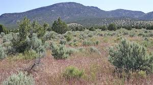 native plants of idaho invasive plants taking a toll on nation u0027s forests including those
