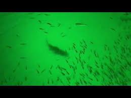green blob fishing light reviews green blob underwater fishing light causes bass fishing frenzy