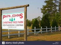 christmas tree farms in sc christmas lights decoration