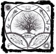 the ogham trees the magic of oak duir