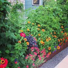 flowers for vegetable garden the garden buzz harvest