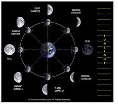 phases of the moon website bird rock