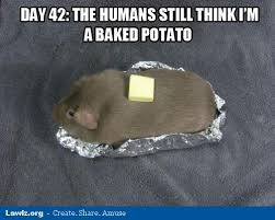 Funny Potato Memes - lawlz 盪 laugh out loud on this humor site with funny pictures and