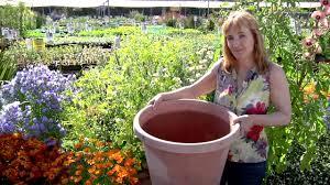 flower gardening 101 container gardening 101 youtube