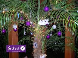 costa rica at christmas time archives geckoeslodge com
