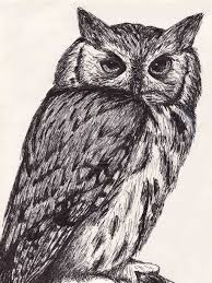 drawn owl pen drawing pencil and in color drawn owl pen drawing