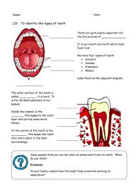 teeth diagram for labelling by fairykitty teaching resources tes
