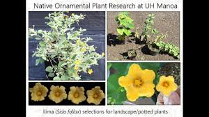 Native Hawaiian Plants For Floriculture And Landscape Use Youtube