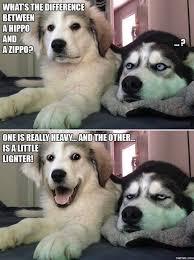 Stupid Animal Memes - funny dog telling a stupid joke