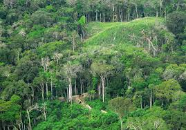 amazon basin researchers find there are at least 14 003 plant types in amazon basin