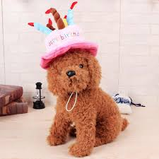 birthday hat 2017 creative dog birthday hat with cake and candles design pets