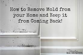 How To Prevent Black Mold In Bathroom Remove Mold From Your Home And Keep It From Coming Back Real