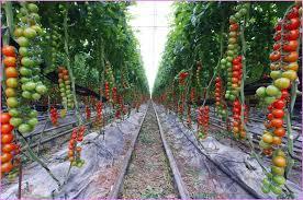 pretty looking raised bed vegetable garden designs gardening for