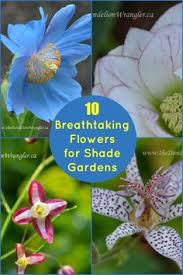 perfect flowering plants for a shade garden rare flowers