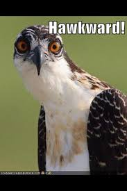 Hawkward Meme - 10 best hawkward images on pinterest funny stuff ha ha and hilarious