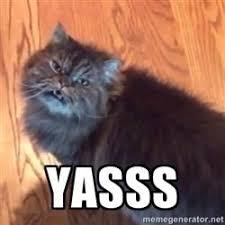 Yasss Meme - yas cat yasss meme gallery pinterest meme
