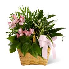 plants for funerals sympathy plants funeral plants plants for funerals
