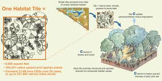native plants los angeles la drainage goes native u2013 san francisco estuary partnership