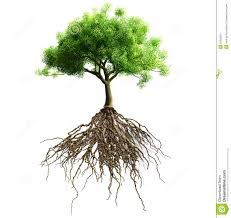 tree with roots stock photo image 50028551