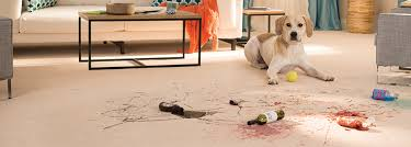 carpet flooring find your floors at carpet one floor home