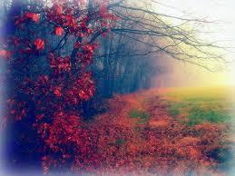 Beautiful Plants by Landscapes Nature Autumn Beautiful Plants Trees Places Dreams